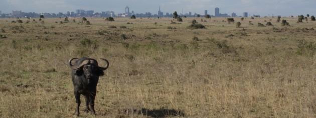 Nairobi is een stad waar je als reiziger naar Oost-Afrika bijna niet omheen kunt. Een overzicht van enkele interessante bezienswaardigheden.