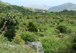 Prachtige natuur op het Griekse schiereiland Pilion
