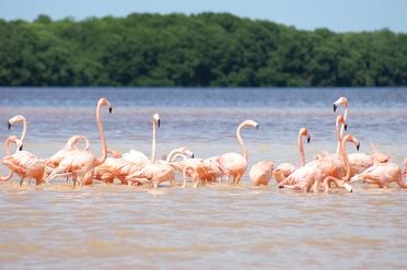 Celestun, de Flamingo stad