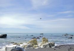 Walvissen spotten in Kaikoura Nieuw Zeeland