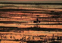 De beste reistips voor Rote Island West Timor Indonesië