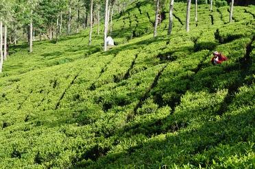 Nuwara Eliya: little England in Sri Lanka