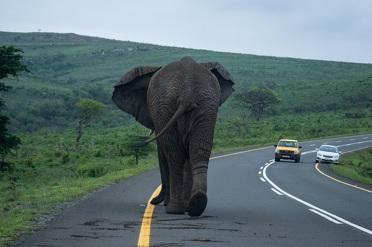 Goedkope safari in Hluhluwe National Park